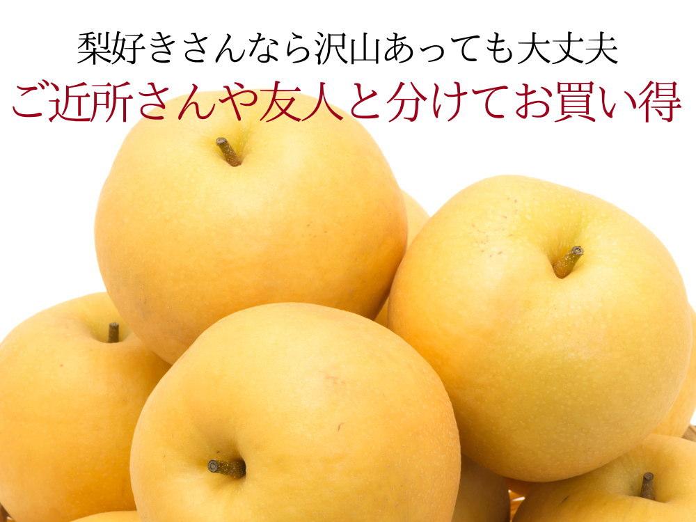 梨好きさんなら沢山あっても大丈夫!新興梨10kg