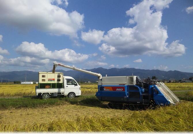 新潟県阿賀野市産コシヒカリの稲刈り風景