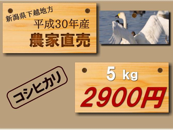 遠藤さんのコシヒカリ 5キロ2900円