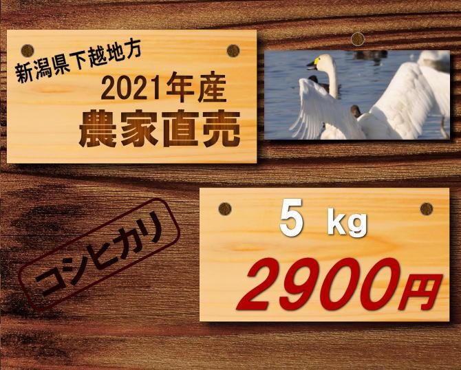 2021年産コシヒカリ新米 5㎏2900円