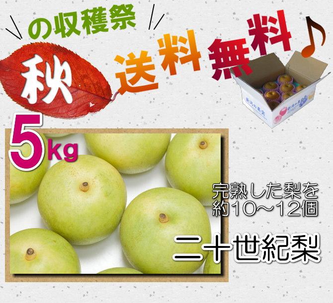 【秋の収穫祭】仲村農園の20世紀梨5kgは送料無料