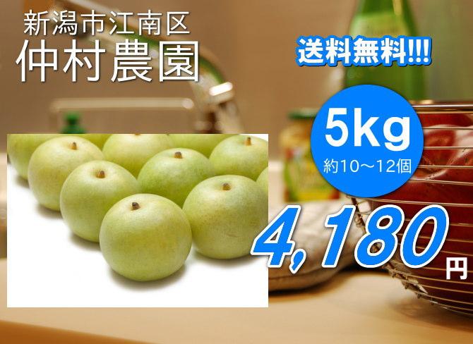 仲村農園の二十世紀梨の大玉は、5kg4180円で送料無料!