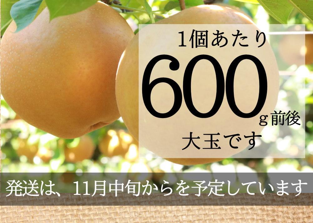 新興梨600g以上の大玉セット、価格は3180円