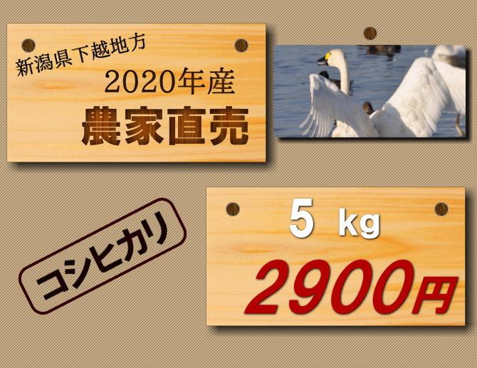 【農家のお米】新潟米 遠藤さんのコシヒカリ 5キロ2900円