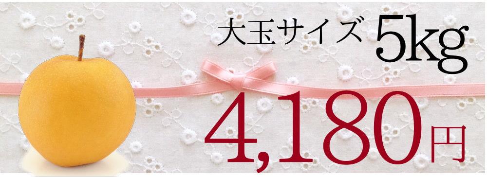大玉サイズ新興梨5kgが4180円