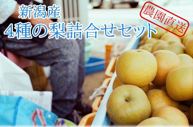 農園直送!新潟産 赤梨青梨 4種の梨詰め合わせセット