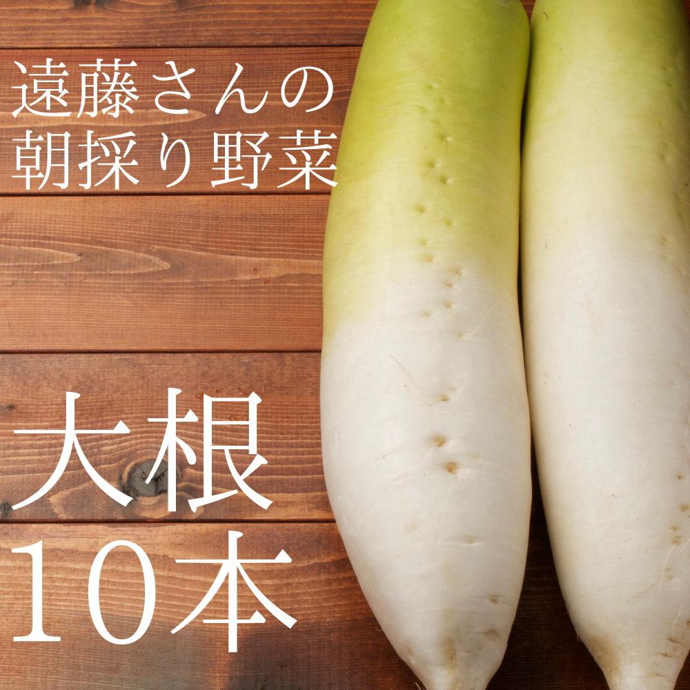 遠藤さんの朝採り大根10本セット
