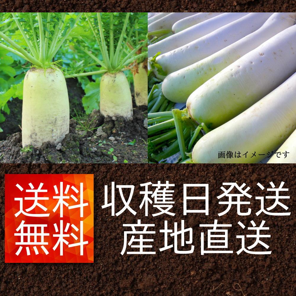 遠藤さんの朝採り漬物用大根は、収穫日発送で産地直送