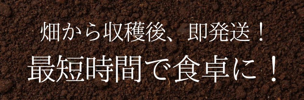 畑から収穫後、即発送!最短時間で食卓に!遠藤さんの朝採り大根