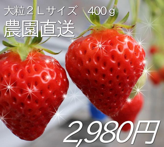 農園直送の大粒2Lサイズ400gが、2,980円