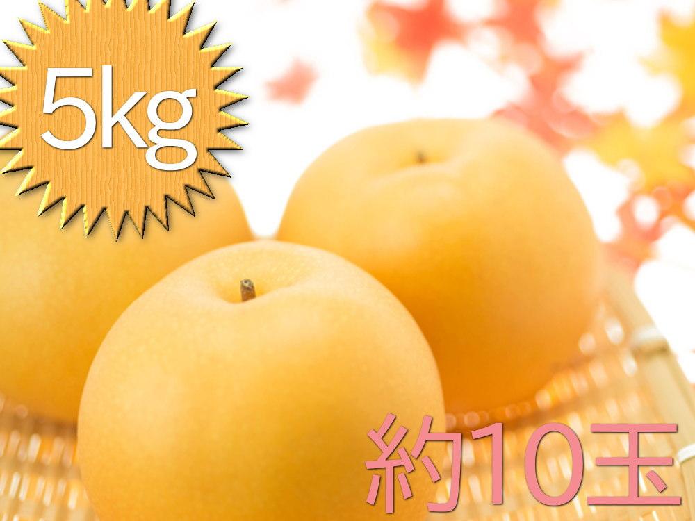 大玉豊水梨5kgおよそ10玉入れ