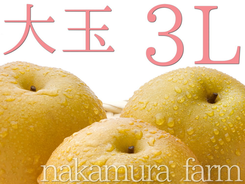 大玉3Lサイズの豊水梨