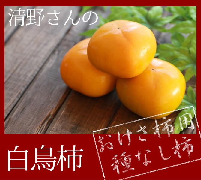 おけさ柿用種なし柿。清野さんの白鳥柿。