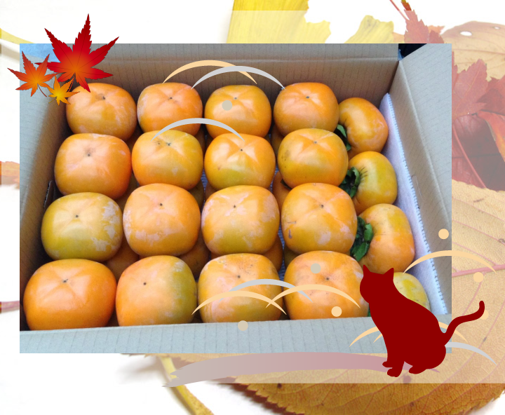 おけさ柿用生渋柿が大容量で超特価