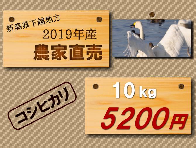 【新潟コシヒカリ】農家直送のお米10kgが5200円