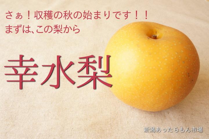 収穫の秋!始まります!!まずはこの梨。幸水梨から