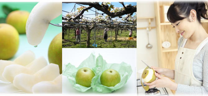 新潟市江南区の仲村農園産。とってもジューシーな20世紀梨