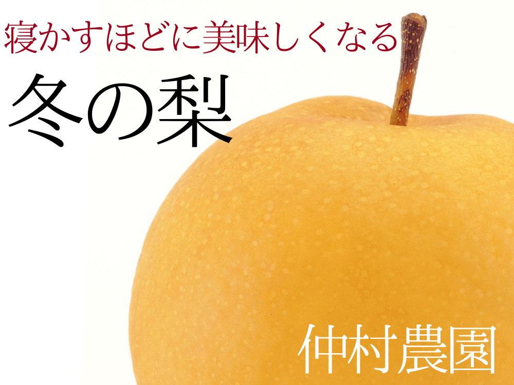 新興梨は、寝かすほどに美味しくなる