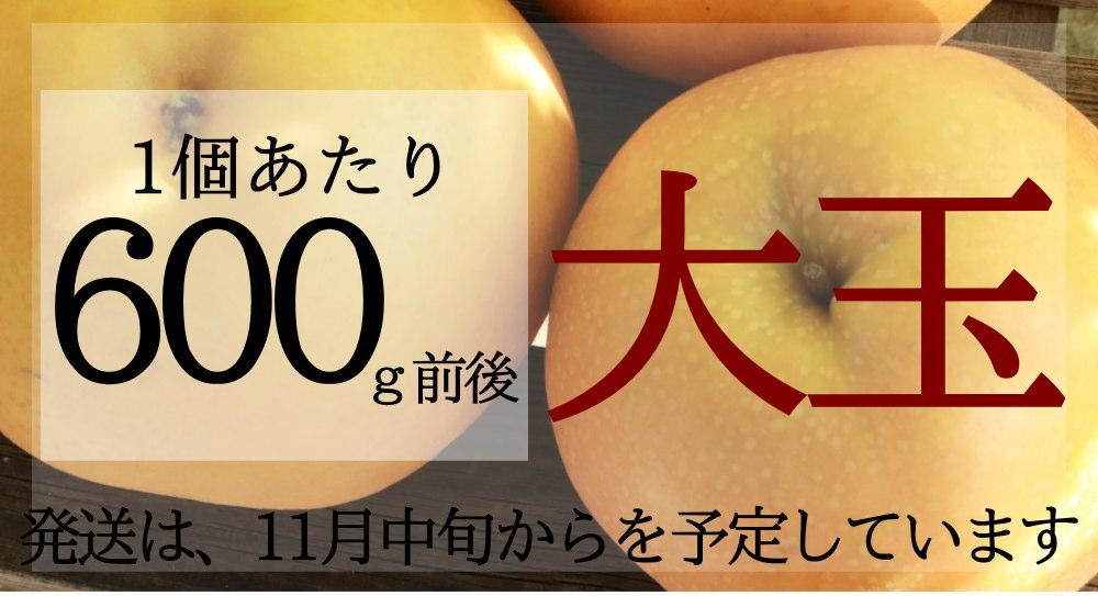 新興梨の600g前後の大玉サイズのセットです。11月中旬頃発送です。