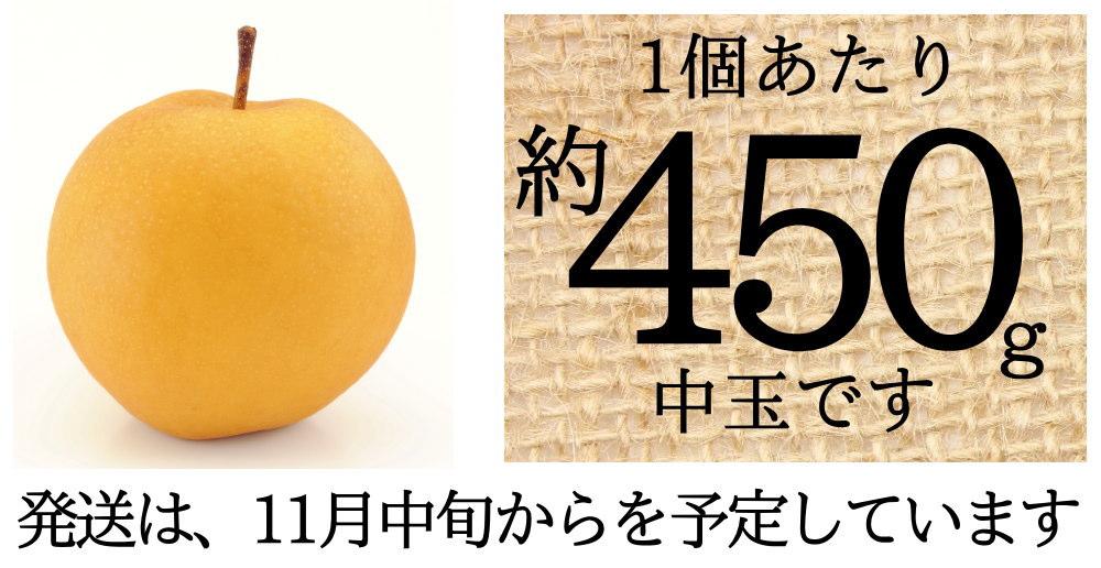 この新興梨は、約450gの中玉サイズ!11月中旬からの発送予定です。