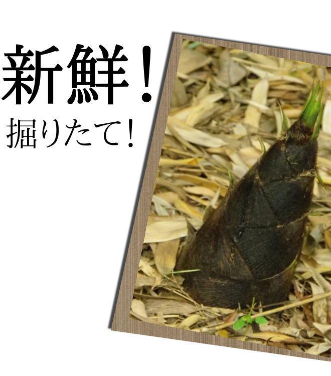 朝採り、掘りたて新鮮な筍をお届けします!