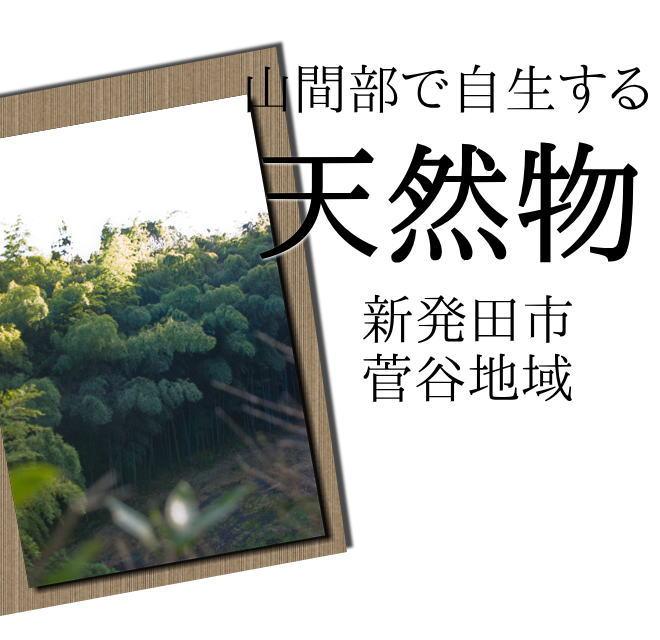新潟県新発田市菅谷地域の山で採れる天然物タケノコです!