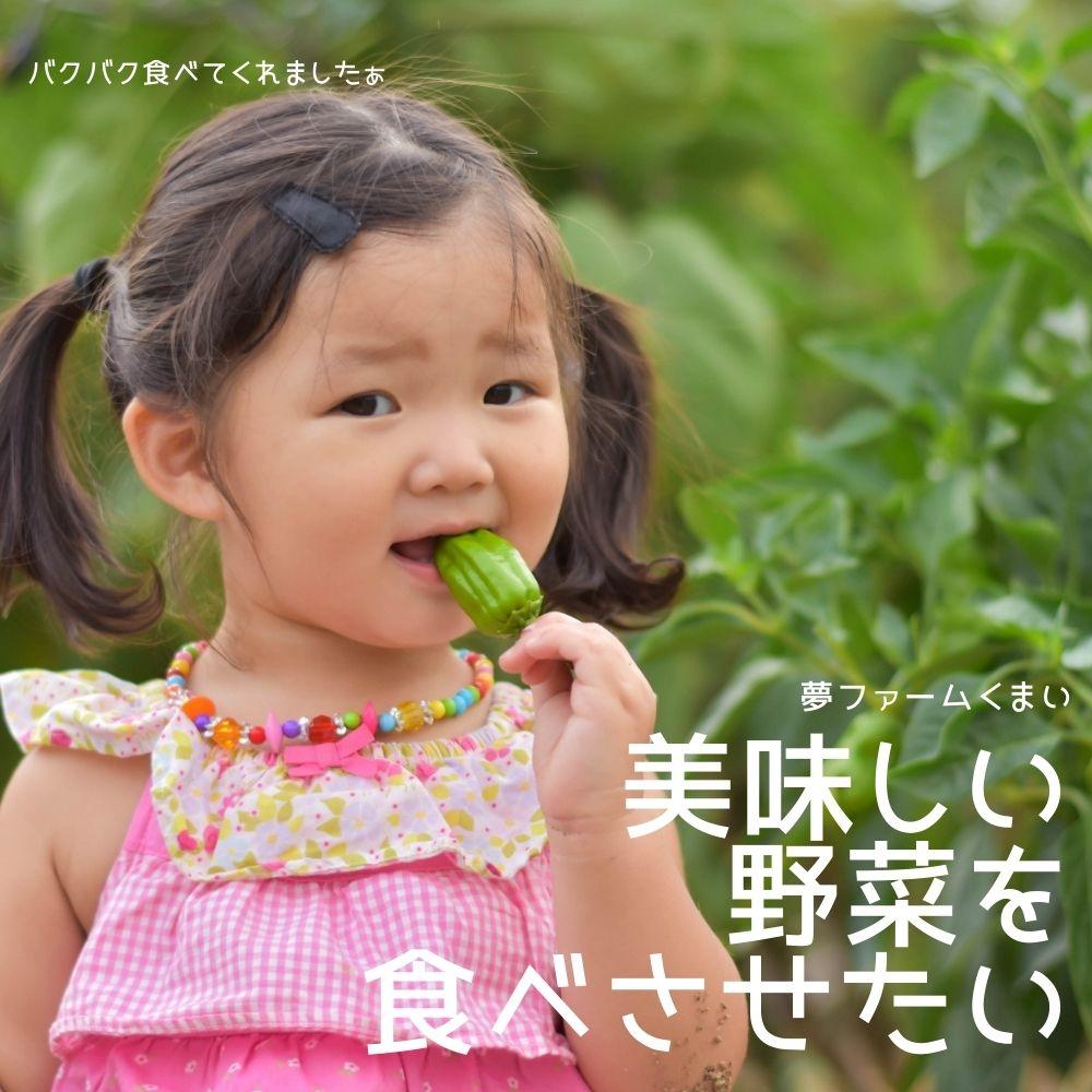 美味しい野菜を食べさせたいなら遠藤さんの野菜セット
