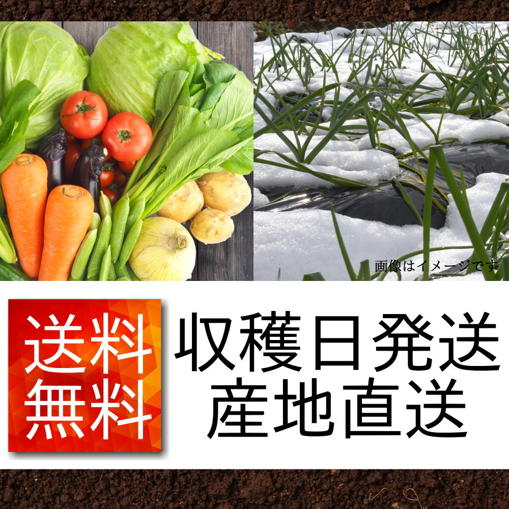 遠藤さんの野菜セットは、農家直送で送料無料